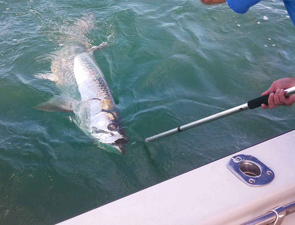 St augustine fishing charters nearshore and offshore for St augustine fishing charter